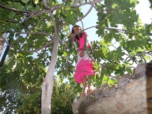 Sky in a fig tree.  Anyone who knows Sky would know that she would find a tree to climb!